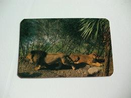 Maia Zoo Leão Portugal Portuguese Pocket Calendar 1988 - Small : 1981-90
