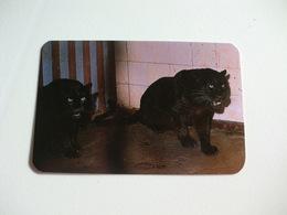 Maia Zoo Pantera Negra Portugal Portuguese Pocket Calendar 1988 - Small : 1981-90