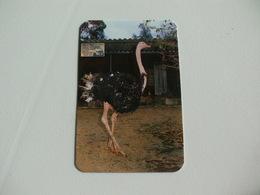 Maia Zoo Avestruz Portugal Portuguese Pocket Calendar 1988 - Small : 1981-90