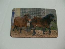 Maia Zoo Pónei Portugal Portuguese Pocket Calendar 1988 - Small : 1981-90