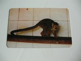 Maia Zoo Boca Negra Portugal Portuguese Pocket Calendar 1987 - Small : 1981-90