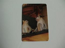 Maia Zoo Patas Ou Pataz Portugal Portuguese Pocket Calendar 1987 - Small : 1981-90