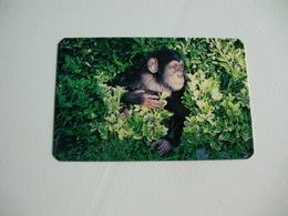Maia Zoo Chimpanzé Portugal Portuguese Pocket Calendar 1987 - Small : 1981-90