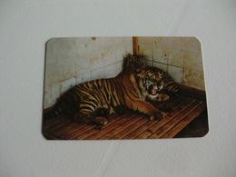 Maia Zoo Tigre De Bengala Portugal Portuguese Pocket Calendar 1987 - Small : 1981-90