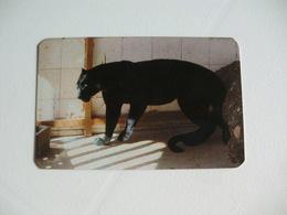 Maia Zoo Pantera Negra Portugal Portuguese Pocket Calendar 1987 - Small : 1981-90