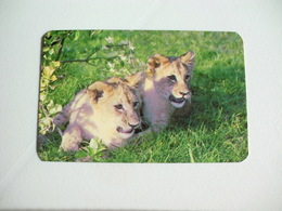 Maia Zoo Leões Portugal Portuguese Pocket Calendar 1987 - Small : 1981-90