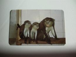 Maia Zoo Macacos S. Tomé Portugal Portuguese Pocket Calendar 1986 - Small : 1981-90