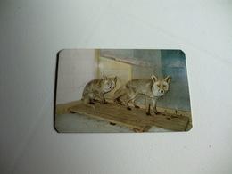 Maia Zoo Raposa Ibérica Portugal Portuguese Pocket Calendar 1986 - Small : 1981-90