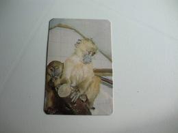 Maia Zoo Agostinho E Albina Portugal Portuguese Pocket Calendar 1986 - Small : 1981-90