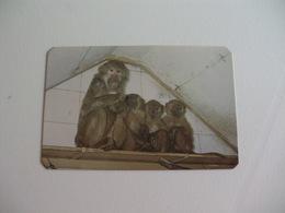 Maia Zoo Macacos Papião Portugal Portuguese Pocket Calendar 1986 - Small : 1981-90