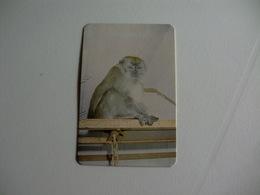 Maia Zoo Macaco Verde Portugal Portuguese Pocket Calendar 1986 - Small : 1981-90