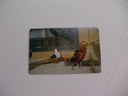 Maia Zoo Faisão Dourado Portugal Portuguese Pocket Calendar 1986 - Small : 1981-90