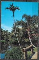 Florida, Sarasota, Jungle Gardens, Unused - Sarasota