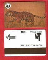 MALAWI - WWF - TIGER - Malawi