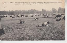 GUERRE 1914 - Bois De Boulogne - Bétail Sur Le Terrain De Bagatelle Pour Paris ( Militaria )  PRIX FIXE - Distrito: 16