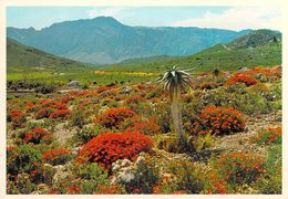 Afrique > Afrique Du Sud KARROO GARDENS WORCESTER *PRIX FIXE - South Africa
