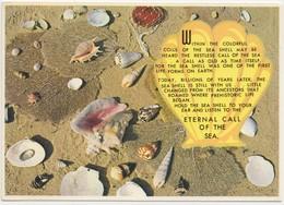 Sea-shells, Eternal Call Of The Sea, Unused Postcard [20831] - Postcards