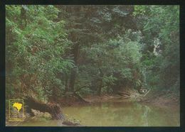 Brasil. AM - Manaus. *Igarapé* Circulada 1988. - Brasil