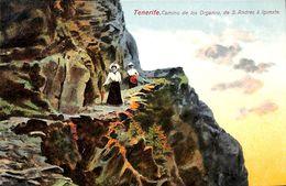 Tenerife - Camino De Los Organos De S. Andres à Igueste  (animado) - Tenerife