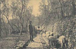 Scena Campestre - 1911        (A-65-100208) - Allevamenti