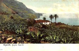 Tenerife -  Rambla Tenerife ( Animado Coloreada) - Tenerife