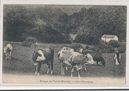 Savoie - Plancherine - Col De Tamié - Abbaye De Tamié - Les Paturages  - Vaches Moines - Non Classés