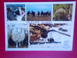 Falkland Animals - Falkland Islands