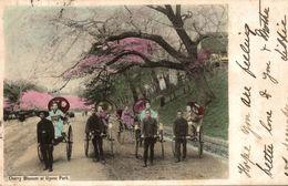 JAPON CHERRY BLOSSOM AT UYENO PARK - Tokio