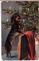 Naughty Dachshund - 1908 T.S.N. POSTCARD - Chiens