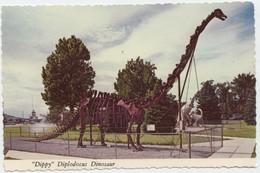 """Dippy"" Diplodocus Dinosaur, Museum Of Natural History, Vernal, Utah, Unused Postcard [20843] - Animals"