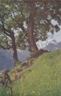 Sommertage In Braunwald - Tödi (3616) * 11. IV. 1917 - GL Glarus