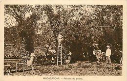 Pays Div-ref K862 - Madagascar - Recolte Du Poivre - Pepper Recolt - Carte Bon Etat - - Madagascar
