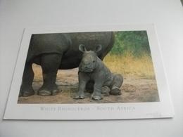 STORIA POSTALE FRANCOBOLLO COMMEMORATIVO LEONE SUD AFRICA  WHITE RHINOCEROS RINOCERONTE - Rhinoceros