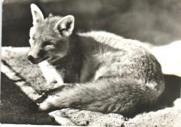 Fuchs (D-A127) - Animaux & Faune
