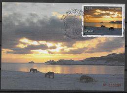 2007  Saint Pierre Et Miquelon  N° 883  .Maxi-carte. Paysage Avec Chevaux. - Cartes-maximum