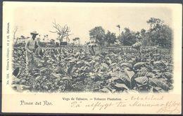 1904 , CUBA , TARJETA POSTAL CIRCULADA ENTRE LA HABANA Y SUECIA , PINAR DEL RIO , VEGA DE TABACOS - Cuba