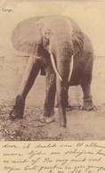 Kanunnikessen Missiezusters Van Den H Augustinus, Heverlee Bij Leuven, Olifant, Elephant (pk42193) - Leuven