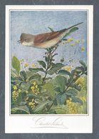 Chromo MENU CACAO SUCHARD, Oiseau, Fauvette Grisette, Chocolat Suchard, Grand Format Env. 20.5 X 14 Cm - Suchard