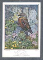 Chromo Menu CHOCOLAT SUCHARD, Oiseau, Alpenflühevogel, Accenteur Des Alpes, Sordone, Grand Format Env. 20.5 X 14 Cm - Suchard