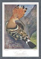 Chromo Menu CHOCOLAT SUCHARD, Oiseau, Wiedehopf, Huppe, Bubbola, Grand Format Env. 20.5 X 14 Cm - Suchard