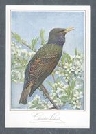 Chromo Menu CHOCOLAT SUCHARD, Oiseau, Grand Format Env. 20.5 X 14 Cm - Suchard
