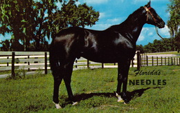 POSTCARD - NEEDLES - Bay Horse. Florida, Ocala - Ocala