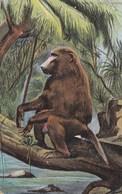 SINGE MONKEY - Monkeys