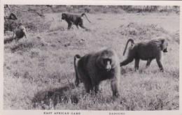 BABOONS . EAST AFRICAN GAME - Monkeys