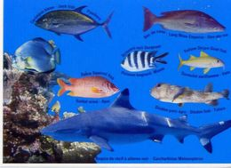 Tahiti - Pesci - Squalo - Formato Grande Non Viaggiata – E 4 - Pesci E Crostacei