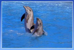 Marineland - Cote D'azur - Antibes - France - Dauphins - Coppia Di Delfini - Formato Grande Non Viaggiata – E 4 - Pesci E Crostacei