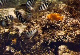 Pesci - Underwater - Along The East African Coast - Formato Grande Non Viaggiata – E 4 - Pesci E Crostacei
