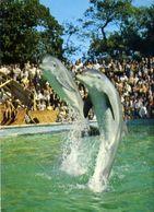 Delfini - In Coppia - Formato Grande Viaggiata – E 4 - Pesci E Crostacei