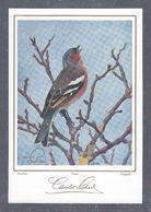 Chromo MENU CAFOLA SUCHARD SUMELA, Oiseau, Buchfink, Pinson, Fringuello, Chocolat Suchard,Grand Format Env. 20.5 X 14 Cm - Suchard