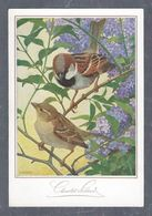 Chromo MENU CAFOLA SUCHARD SUMELA, Oiseaux, Chocolat Suchard,Grand Format Env. 20.5 X 14 Cm - Suchard